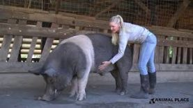 From Petting Zoo to Sanctuary: Mishka