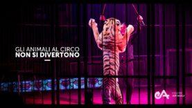 Il Circo Non è Divertente per gli Animali - un video di Essere Animali