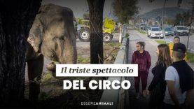 Il triste spettacolo del circo – Essere Animali