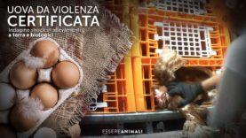 Indagine SHOCK sulla produzione di uova – Essere Animali