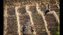 Jagers laten meerdere dieren onvoorstelbaar lijden