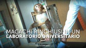 Macachi rinchiusi in un Laboratorio Universitario – Essere Animali