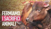 Mai più sacrifici animali, aiutaci a fermare il festival di Gadhimai