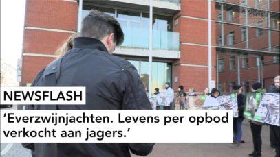 NEWSFLASH: Everzwijnjachten. Levens per opbod verkocht aan jagers.