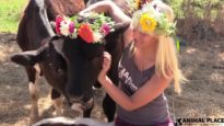 Rescued Calves in Flower Crowns
