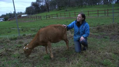 Rescued from Dairy: Belle's Story
