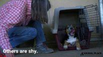 Street to Sanctuary: Adoptable Dogs