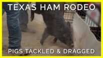 Terrified Pigs Slapped, Tackled, & Dragged in Texas Ham Rodeo