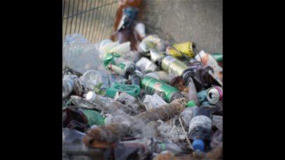 The Meat Industry Treats Animals Like Trash