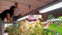Transfarmation- This Farmer Traded In Chickens for Hemp