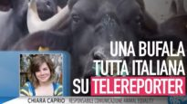 """Una bufala tutta italiana"" su Telereporter"