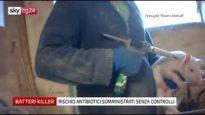 USO INDISCRIMINATO DI ANTIBIOTICI negli allevamenti | servizio su Sky TG24