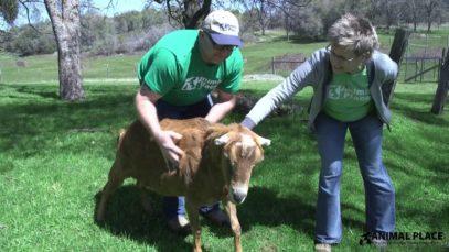 Volunteer Spotlight: Cara and Brent