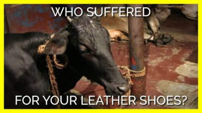 Who Suffered For Your Leather Shoes?