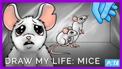 Draw My Life: Laboratory Mice