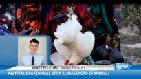 Festival di Gadhimai, l'intervista di Matteo Cupi a Telereporter