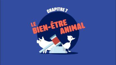 L214 EDUCATION  /  Le bien-être animal