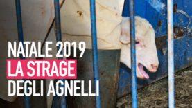 Natale 2019, la strage degli agnelli