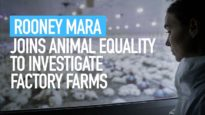 Rooney Mara Joins Animal Equality to Investigate Factory Farms – With My Own Eyes