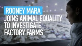 Rooney Mara Joins Animal Equality to Investigate Factory Farms - With My Own Eyes