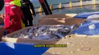 Su Report la verità sugli allevamenti di pesci – indagine con Essere Animali