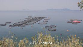 Le problematiche degli allevamenti intensivi di pesci in Grecia – Un'indagine di Essere Animali