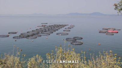 Le problematiche degli allevamenti intensivi di pesci in Grecia - Un'indagine di Essere Animali