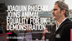 Joaquin Phoenix Joins Animal Equality for UK Demonstration