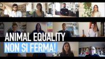 Coronavirus: Animal Equality non si ferma, il nostro videomessaggio