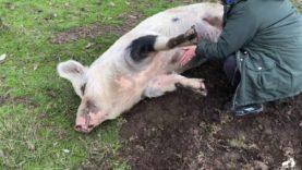 Happiness is... Mumma Pig