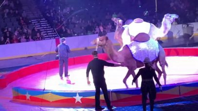 Violence is Center Stage at the Tangier Shrine Circus