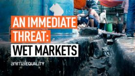 Animal Equality's Campaign to Ban Wet Markets