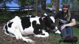 Animal Place Virtual Tour: Calf Pasture