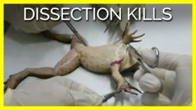 #DissectionKills
