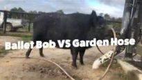 Ballet Bob VS Garden Hose