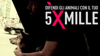 Dona il tuo 5xMille ad Animal Equality