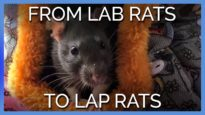 From Lab Rats to Lap Rats: See These Three Sisters' Journey
