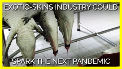The Exotic-Skins Industry Could Spark the Next Pandemic
