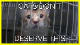 Cats Don't Deserve This