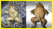 Dissection: Which Is Best?