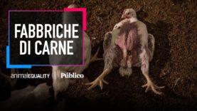 Il video CHOC di un allevamento intensivo di polli