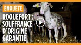 La face cachée du Roquefort : enquête