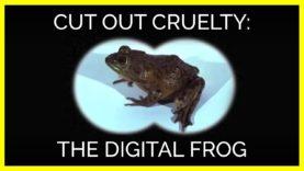 The Digital Frog