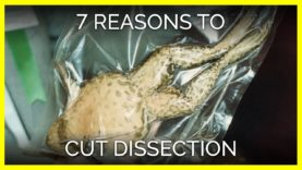 Top 7 Reasons to Cut Out Dissection