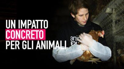 UN IMPATTO CONCRETO PER GLI ANIMALI