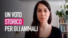 Voto storico sul trasporto di animali!