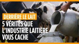 5 vérités que l'industrie laitière vous cache