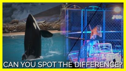 Can You Spot the Difference Between SeaWorld and Cruel Animal Circuses?