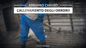 Chiuso allevamento degli orrori a seguito dell'indagine di Essere Animali