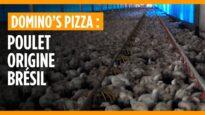 Enquête : Domino's Pizza, poulet origine Brésil
